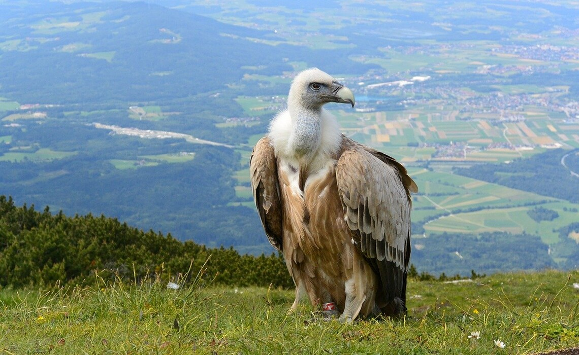 Vulture 700155 1280